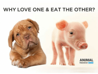 Animals, Love, and Memes: WHY LOVE ONE & EAT THE OTHER?  ANIMAL  liberation WHY LOVE ONE & EAT THE OTHER?  The RSPCA's motto is 'For all creatures great & small'. Yet every year to raise money for animals they have thousands of animals killed to be dismembered and cooked on the BBQ.  If you care about animals, you don't kill them. It's very simple.   https://www.change.org/p/rspca-stop-betraying-animals  That is why we are asking the RSPCA to stop betraying animals. If you agree that caring about animals doesn't include killing them, please SIGN and SHARE our petition and let's get the RSPCA to do the right thing! bit.ly/rspca-stop-betraying-animals