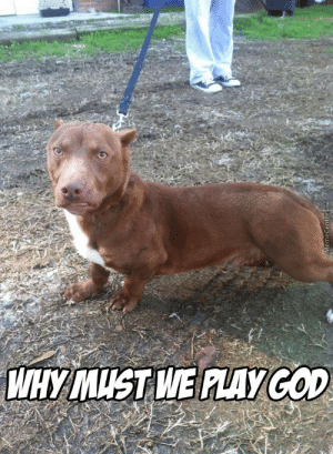 Funny Pitbull Pictures