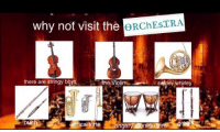 Tumblr, Blog, and Proud: why nof visit the  there are stringy boysthe Violinswirley whirley  ortical forte  angery storage b imawkwardtrash:  i am a proud player of a critical forte  i'm a  s t r i n g y  boy