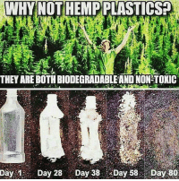 "Anaconda, Memes, and Common: WHY NOT HEMPPLASTICS?  THEY ARE BOTHBIODEGRADABLEANONONETOXIC  Day 1 Day 28  Day 38 Day 58  Day 80 @Regrann from @standup911 - Repost @dilute_the_power ・・・ What Is Hemp Plastic? To understand hemp plastic, we first need to understand hemp. Hemp is one of the many names given to the Cannabis Sativa plant. Contrary to popular belief, hemp is not the same as marijuana, and actually has very little in common with it. Industrial hemp is grown for its long stalks and contains less than 0.5% THC (Tetrahydrocannabinol), which is the psychoactive property of marijuana. Therefore, it is not possible to get ""high"" from hemp. Industrial hemp is grown in abundance in many parts of the world and produces the strongest natural fiber known to man. Hemp as a raw material is one of the most useful plants on our planet with thousands of applications including a viable plastic material! Hemp plastic is a bioplastic made using industrial hemp. There are many different types of hemp plastic; from standard plastics reinforced with hemp fibers, to a 100% hemp plastic made entirely from the hemp plant. Hemp plastic is recyclable and can be manufactured to be 100% biodegradable. The most common type of hemp plastics are those plastics which infuse hemp fibers. The benefit of infusing hemp fibers lies in that less plastic is used (less oil, less pollution) and a more durable, biodegradable product is created. Sometimes, the oil used in conventional plastics can also be replaced with renewable resource feedstocks including cellulose from hemp, microbially-grown polymers, or those extracted from starch. Regrann"