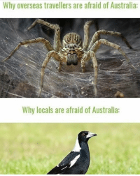 Definitely, Memes, and Australia: Why overseas travellers are afraid of Australia:  Why locals are afraid of Australia: I was talking about this exact thing with my girlfriend (not from Australia) the other day so I definitely feel this