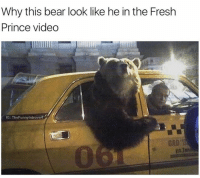 Drake, Fresh, and Kardashians: Why this bear look like he in the Fresh  Prince video  IG: The Funnyintrove 😂😂😂- lol - -( RP @thefunnyintrovert - - - - 420 memesdaily Relatable dank MarchMadness HoodJokes Hilarious Comedy HoodHumor ZeroChill Jokes Funny KanyeWest KimKardashian litasf KylieJenner JustinBieber Squad Crazy Omg Accurate Kardashians Epic bieber Weed TagSomeone hiphop trump rap drake
