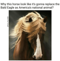 Horses, Memes, and Eagle: Why this horse look like it's gonna replace the  Bald Eagle as America's national animal? Awe horsie horse trumpInauguration Ha ha. I'm weak flatlined dead pettypost nochill teamnoharmdone noharmdone