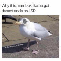 Cats, Meme, and Memes: Why this man look like he got  decent deals on LSD  Cat Memes  @Cabbage @shitheadsteve got better deals on memes