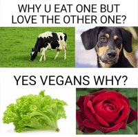 Dank, Love, and 🤖: WHY U EAT ONE BUT  LOVE THE OTHER ONE?  YES VEGANS WHY?