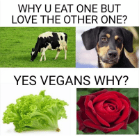 Funny, Love, and Vegan: WHY U EAT ONE BUT  LOVE THE OTHER ONE?  YES VEGANS WHY? Tag a vegan https://t.co/APJtVizBAZ