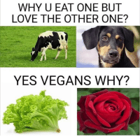 Love, Memes, and Vegan: WHY U EAT ONE BUT  LOVE THE OTHER ONE?  YES VEGANS WHY? Tag a Vegan 🌹