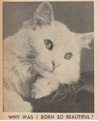 yesterdaysprint:  Good Morning by the Daily Mirror, England, May 5, 1944: WHY WAS I BORN SO BEAUTIFUL? yesterdaysprint:  Good Morning by the Daily Mirror, England, May 5, 1944
