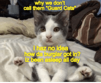"""Cats, Been, and How: why we don't  call them """"Guard Cats  i haz no idea  how da burglar got in?  iz been asleep all day"""