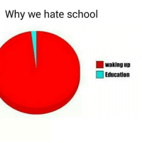 Funny, Education, and Educationals: Why we hate school  waking up  Education