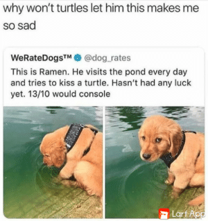pray for you, Ramen: why won't turtles let him this makes m  so sad  WeRateDogsTM  @dog_rates  This is Ramen. He visits the pond every day  and tries to kiss a turtle. Hasn't had any luck  yet. 13/10 would console  Larf App pray for you, Ramen
