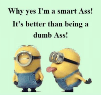 Ass, Dumb, and Memes: Why yes I'm a smart Ass!  It's better than being a  dumb Ass!