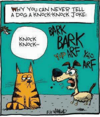 Don't tease the dog! #caturday: WHY YoU CAN NEVER TELL  A DOG A KNocK-KNocK JoKE:  KNocK  KNock.  BAR  ARF Don't tease the dog! #caturday