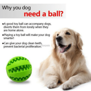 pureslime:: Why you dog  need a ball?  .A good toy ball can accompany dogs,  diverts them rom lonely when they  are home alone.  Playing a toy ball will make your dog  smarter!  .Can give your dog clean teeth,  prevnt bacterial proliferation  tarpets pureslime: