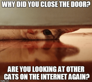 Cats, Internet, and Cat: WHYDID YOU CLOSETHE DOOR?  ARE YOU LOOKING AT OTHE  CATS ON THE INTERNET AGAIN? Overly attached cat friend