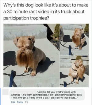 "damned: Why's this dog look like it's about to make  a 30 minute rant video in its truck about  participation trophies?  ""Lemmie tell you what's wrong with  America - it's them damned cats. I ain't got nothing against cats  - hell, I've got a friend who's a cat - but I tell ya those cats...""  Like · Reply · 1m"