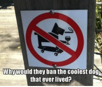 Funny, Memes, and Hilarious: Whywould they ban the coolest dog  that ever lived? Top 60 Funny Memes And Hilarious Sayings 23