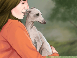 How To, Jenna Marbles, and How: wi  ki How to Care for an Italian Greyhound how to impersonate jenna marbles