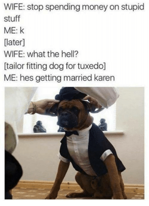 Money, Stuff, and Wife: WIFE: stop spending money on stupid  stuff  ME: K  later]  WIFE: what the hell?  [tailor fitting dog for tuxedo]  ME: hes getting married karen