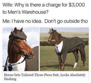 Absolutely stunning: Wife: Why is there a charge for $3,000  to Men's Warehouse?  Me: I have no idea. Don't go outside tho  Horse Gets Tailored Three-Piece Suit, Looks Absolutely  Dashing Absolutely stunning