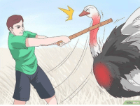 Australian soldier achieving his first kill during the great emu war (1932) colorized: wiki  How Australian soldier achieving his first kill during the great emu war (1932) colorized