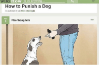 how: wiki  How to do anything...  How to Punish a Dog  Co-authored by lan Miies Cheong  Put  Flashbang him  Edt