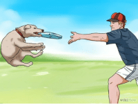 wikiHow Step 1. Place Frisbee in dog's mouth. Step 2. Toss dog through the air.