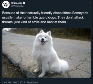 blessedimagesblog:Blessed_guard: Wikipedia  W @Wikipedia  Because of their naturally friendly dispositions Samoyeds  usually make for terrible guard dogs. They don't attack  threats; just kind of smile and bark at them.  2:46 PM · Feb 7, 2019 · TweetDeck blessedimagesblog:Blessed_guard