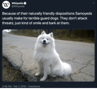 Good boye is too good: Wikipediae  @Wikipedia  Because of their naturally friendly dispositions Samoyeds  usually make for terrible guard dogs. They don't attack  threats; just kind of smile and bark at them.  2:46 PM Feb 7, 2019 TweetDeck Good boye is too good