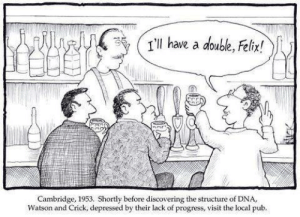 watson and crick: WIl have a doube, Felix!  Cambridge, 1953. Shortly before discovering the structure of DNA,  Watson and Crick, depressed by their lack of progress, visit the local pub.