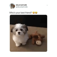 Best Friend, Memes, and Twitter: WILD NATURE  @WILDNATURE  Who's your best friend? wow this takes a TURN 😂 (@wildnature on Twitter)