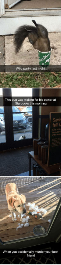 animalsnaps:animal snaps: Wild party last night   This pug was waiting for his owner at  Starbucks this morning  Savi  fall fa  Save 30% o  the mercha  of the seaso  Excludes all Teava  merchandise local pr  eusable cup and Veri  t participating stores  Limited to  stockon   When you accidentally murder your best  friend animalsnaps:animal snaps