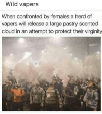 Cloud, Wild, and Virginity: Wild vapers  When confronted by females a herd of  vapers vwill release a large pastry scented  cloud in an attempt to protect their virginity  gnew