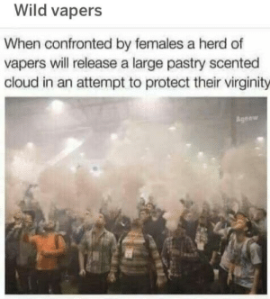 A herd of wild vapers. by xo1opossum MORE MEMES: Wild vapers  When confronted by females a herd of  vapers vwill release a large pastry scented  cloud in an attempt to protect their virginity  gnew A herd of wild vapers. by xo1opossum MORE MEMES