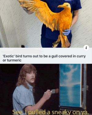 Curry, Turmeric, and Sneaky: Wildife Nune  i  'Exotic' bird turns out to be a gull covered in curry  or turmeric  See pulled a sneaky on ya. Sneaky curry