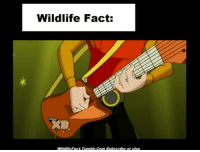 Com, Fact, and Wildlife: Wildlife Fact:  Wildlifcfact. Tumble.Com Subscribe or elso