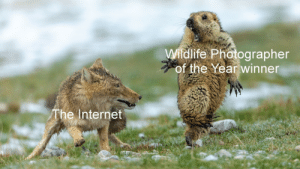 Memes, am I right?: Wildlife Photographer  of the Year winner  The Internet Memes, am I right?