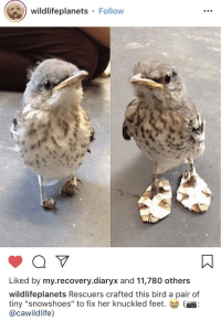 "Crying, Tumblr, and Blog: wildlifeplanets Follow  Liked by my.recovery.diaryx and 11,780 others  wildlifeplanets Rescuers crafted this bird a pair of  tiny ""snowshoes"" to fix her knuckled feet.  @cawildlife) <p><a href=""http://lovelydeck.tumblr.com/post/176194904858/greglestrade-interesting-that-im-crying-her"" class=""tumblr_blog"">lovelydeck</a>:</p><blockquote> <p><a href=""http://greglestrade.tumblr.com/post/175961455949/interesting-that-im-crying"" class=""tumblr_blog"">greglestrade</a>:</p> <blockquote><p>Interesting that I'm crying</p></blockquote>  <p>Her shoe just right for her got dan feet</p> </blockquote>"