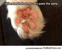 Cats, Tumblr, and Blog: Wilineverlookat my cat's paws the same...  you should probably go to TheMetaPicture.com epicjohndoe:  Well, This Changes Everything Completely