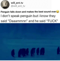 "Memes, Best, and Fuck: will ent.tv  @will ent tv  Penguin falls down and makes the best sound ever  I don't speak penguin but i know they  said ""Daaammnn"" and he said ""FUCK"" 🤣This is amazing"