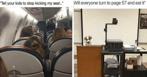 "Delivery! Fresh hot doggo memes at your service!#funnydogs #dogmemes #animalmemes #cutedogs #funnymemes #: Will everyone turn to page 57 and eat it""  Tell your kids to stop kicking my seat."" Delivery! Fresh hot doggo memes at your service!#funnydogs #dogmemes #animalmemes #cutedogs #funnymemes #"
