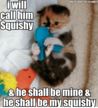 Facebook, Memes, and facebook.com: will  Squishy  www.facebook.com/cat.addicts  he shall be my squishy -Iceprincess