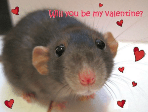 Valentine, Will, and You: Will you be my valentine?