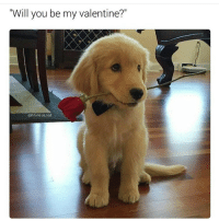 """??: """"Will you be my valentine?""""  @hilarious,ted ??"""