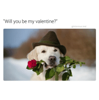 """Funny, Be My Valentine, and Will You Be My Valentine: """"Will you be my valentine?""""  @hilarious ted Yes doggo i will (@hilarious.ted)"""