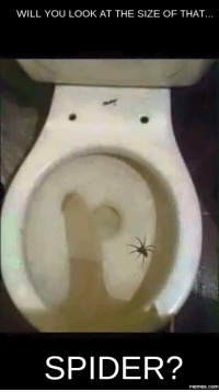 Would You Look At That: WILL YOU LOOK AT THE SIZE OF THAT  SPIDER?  memes.COM