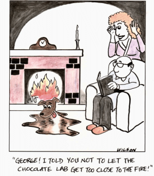 "omg-images:  [OC] Chocolate Lab: WILSo  ""GEORLE! I TOLD You NOT TO LET THE  CHOCaLATE LAB GET Too CLOSE ToTHE FIRE! omg-images:  [OC] Chocolate Lab"