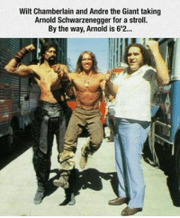 """André the Giant, Arnold Schwarzenegger, and Club: Wilt Chamberlain and Andre the Giant taking  Arnold Schwarzenegger for a stroll.  By the way, Arnold is 6'2. <p><a href=""""http://laughoutloud-club.tumblr.com/post/167019835951/cyclops-and-goliath"""" class=""""tumblr_blog"""">laughoutloud-club</a>:</p>  <blockquote><p>Cyclops and Goliath</p></blockquote>"""