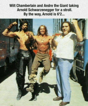 laughoutloud-club:  Cyclops and Goliath: Wilt Chamberlain and Andre the Giant taking  Arnold Schwarzenegger for a stroll.  By the way, Arnold is 6'2. laughoutloud-club:  Cyclops and Goliath