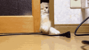 wingsofwarriors:  anemia:  that door lick omg   maybe if i give it kissies it'll let me through: wingsofwarriors:  anemia:  that door lick omg   maybe if i give it kissies it'll let me through